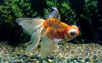 根据自身五行,风水鱼养几条非常好?