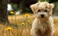 養狗相關的風水知識