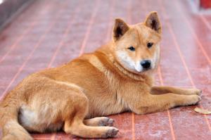 什么生肖的人不適合養狗?