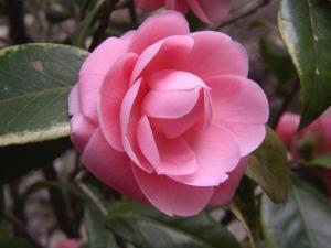 一种生肖对应一种花,看看你的花语是什么?